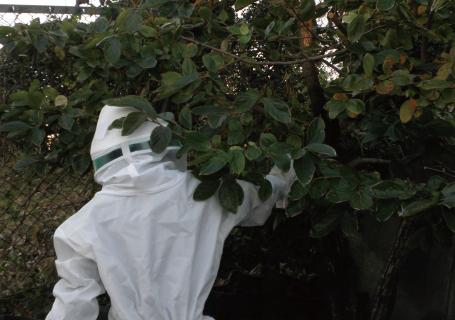 蜂の巣駆除の写真